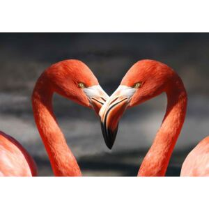 Üvegkép Love Flamingoes