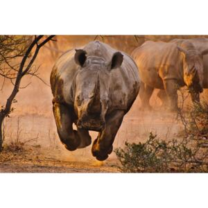 Rhino learning to fly, (128 x 85 cm)