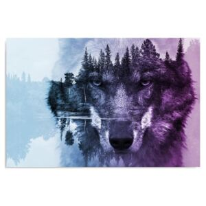 Kép CARO - The Wolf On The Background Of The Forest - Purple 40x30 cm