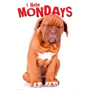 Plakát - I Hate Mondays